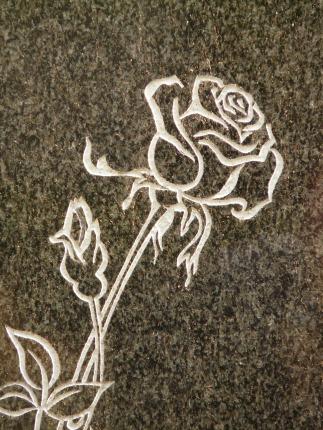 rose-5830_1920.jpg