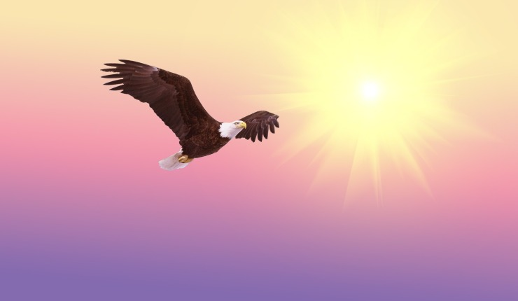 bald-eagle-521492_1920