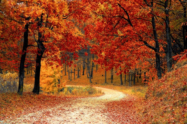 fall-1072821_1280