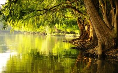 tree in river